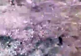 فیلمی دردناک از آزار و اذیت الاغ در مازندران