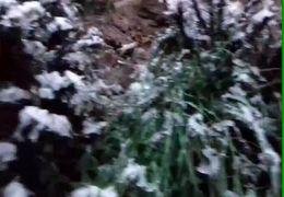 تصاویری از بارش برف در  کجور +فیلم